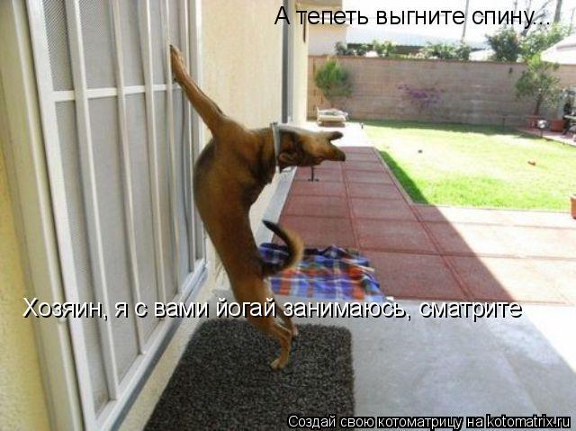 Котоматрица: А тепеть выгните спину... Хозяин, я с вами йогай занимаюсь, сматрите