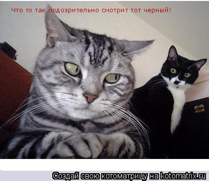 Котоматрица: Что то так подозрительно смотрит тот черный!