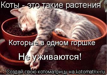 Котоматрица: Которые в одном горшке Не уживаются! Коты - это такие растения