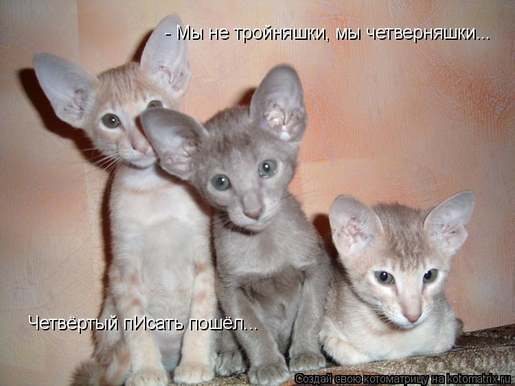 Котоматрица: - Мы не тройняшки, мы четверняшки... Четвёртый пИсать пошёл...