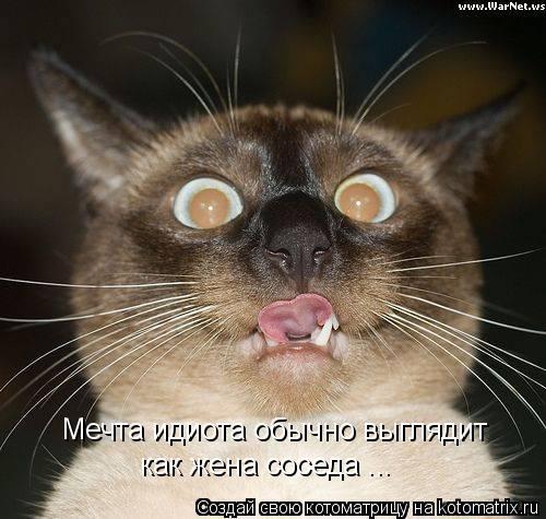 Котоматрица: Мечта идиота обычно выглядит  как жена соседа ...
