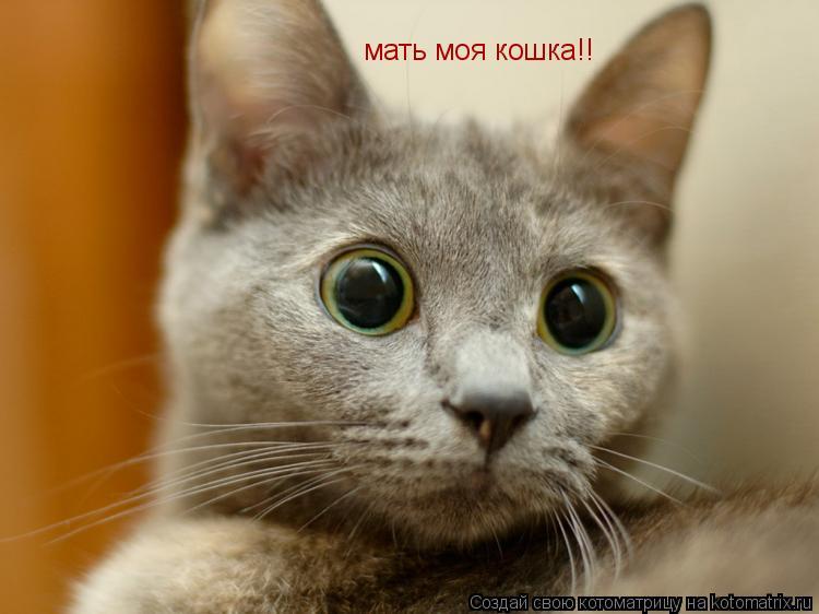 Котоматрица: мать моя кошка!!
