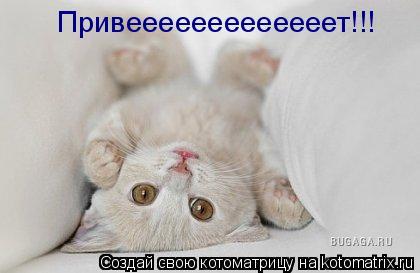 Котоматрица: Привееееееееееееет!!!