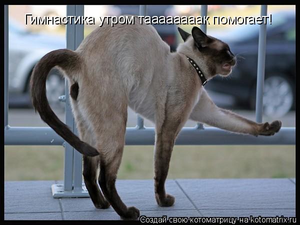 Котоматрица: Гимнастика утром таааааааак помогает!