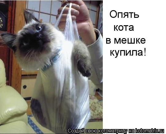Котоматрица: Опять  кота в мешке купила!