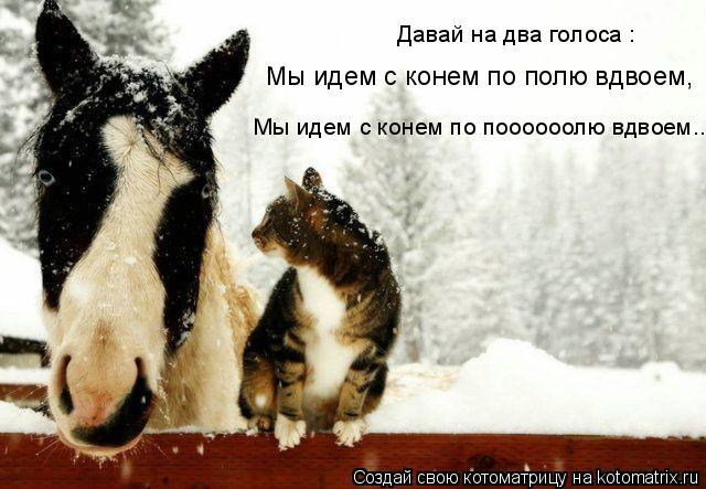 Котоматрица: Мы идем с конем по полю вдвоем, Мы идем с конем по поооооолю вдвоем... Давай на два голоса :