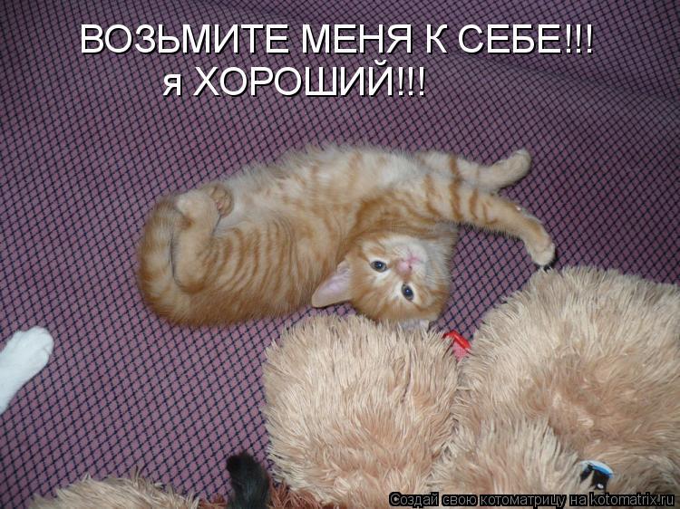 Котоматрица: ВОЗЬМИТЕ МЕНЯ К СЕБЕ!!! я ХОРОШИЙ!!!