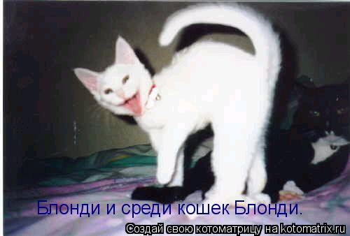 Котоматрица: Блонди и среди кошек Блонди.