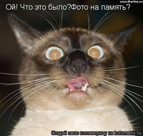Котоматрица: Ой! Что это было?Фото на память?
