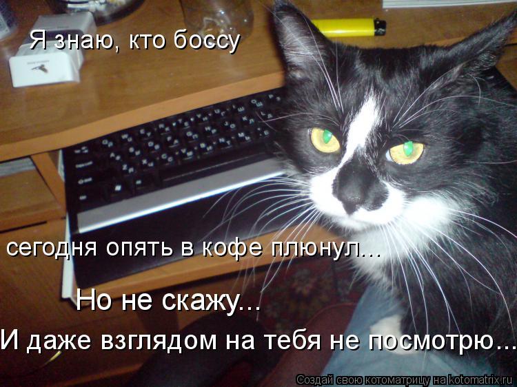 Котоматрица: Я знаю, кто боссу сегодня опять в кофе плюнул... Но не скажу... И даже взглядом на тебя не посмотрю...
