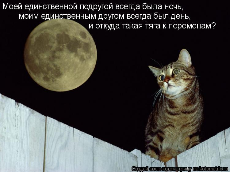 Котоматрица: Моей единственной подругой всегда была ночь,  моим единственным другом всегда был день,  и откуда такая тяга к переменам?