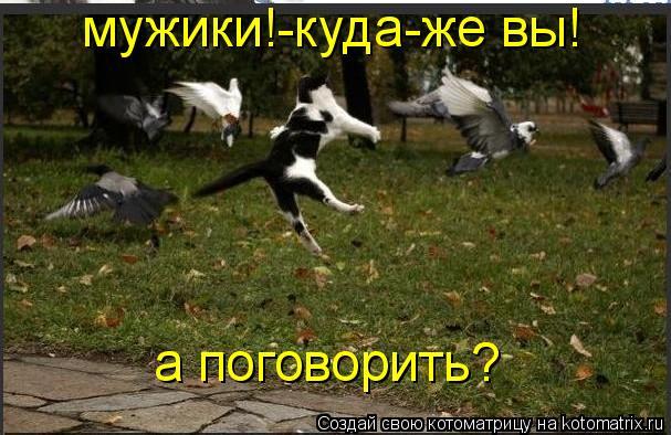 Котоматрица: мужики!-куда-же вы! а поговорить?
