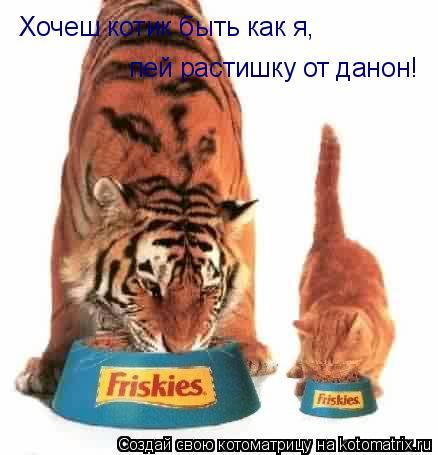 Котоматрица: Хочеш котик быть как я, пей растишку от данон!