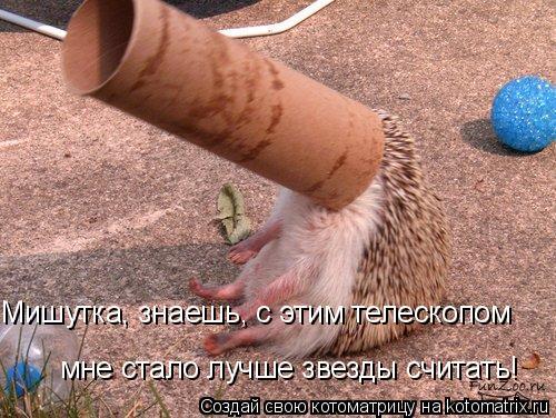 Котоматрица: Мишутка, знаешь, с этим телескопом  мне стало лучше звезды считать!