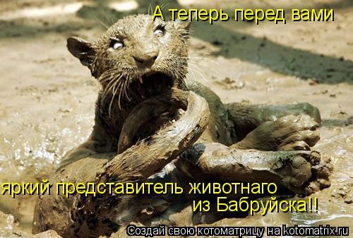 Котоматрица: А теперь перед вами яркий представитель животнаго из Бабруйска!!