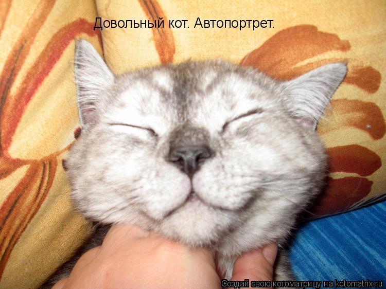 Котоматрица: Довольный кот. Автопортрет.