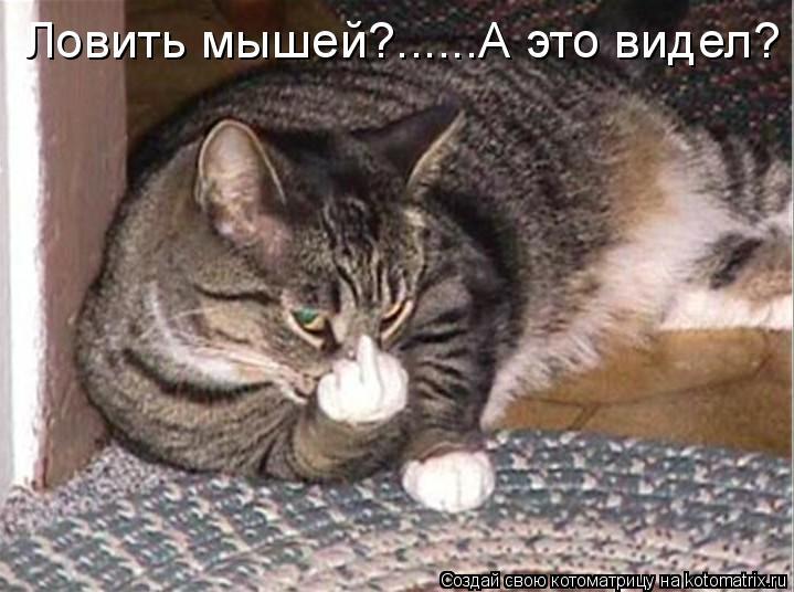 Котоматрица: Ловить мышей?......А это видел?