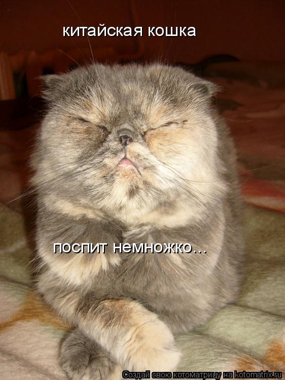 Котоматрица: китайская кошка поспит немножко...