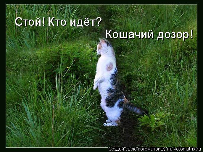 Котоматрица: Стой! Кто идёт? Кошачий дозор!