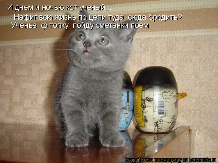 Котоматрица: И днем и ночью кот ученый... Нафиг всю жизнь по цепи туда  сюда бродить? Ученье  ф топку  пойду сметанки поем