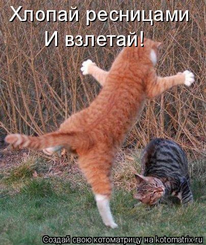 Котоматрица: Хлопай ресницами И взлетай!