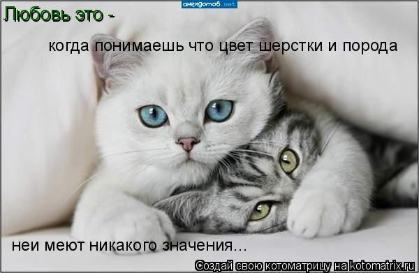 Котоматрица: Любовь это -  когда понимаешь что цвет шерстки и порода неи меют никакого значения...