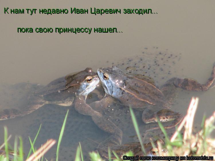Котоматрица: К нам тут недавно Иван Царевич заходил...  пока свою принцессу нашел...