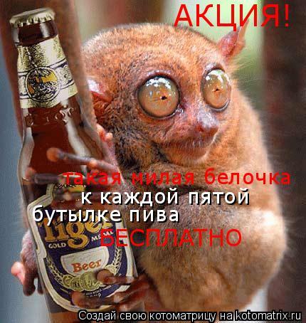 Котоматрица: АКЦИЯ! такая милая белочка  к каждой пятой  бутылке пива БЕСПЛАТНО