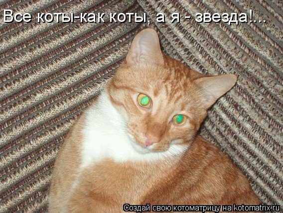 Котоматрица: Все коты-как коты, а я - звезда!...