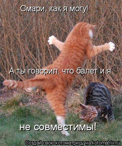 Котоматрица: Смари, как я могу!  А ты говорил, что балет и я  не совместимы!