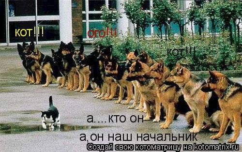 Котоматрица: кот!!! кот!!! ого!!! а....кто он а,он наш начальник