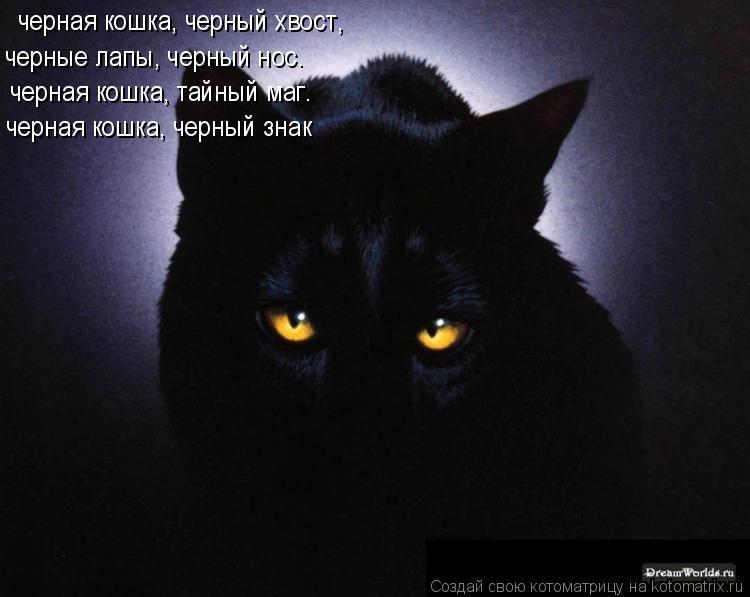 Котоматрица: черная кошка, черный хвост, черные лапы, черный нос. черная кошка, тайный маг. черная кошка, черный знак