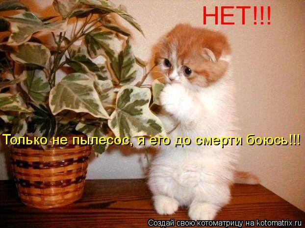 Котоматрица: Только не пылесос, я его до смерти боюсь!!! НЕТ!!!