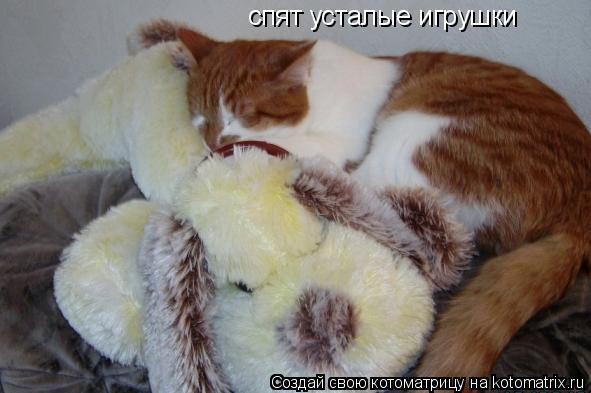 Котоматрица: спят усталые игрушки