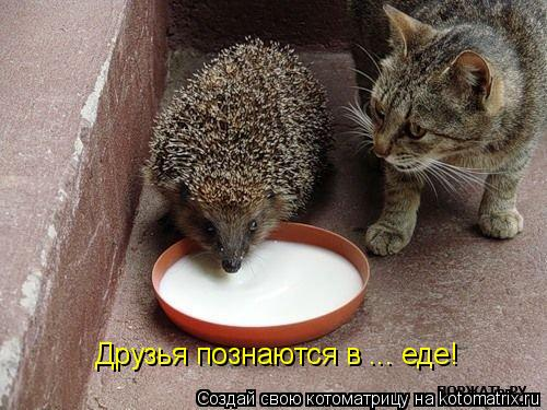 Котоматрица: Друзья познаются в ... еде!