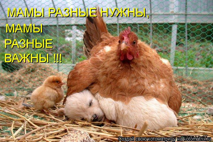 Котоматрица: МАМЫ РАЗНЫЕ НУЖНЫ, МАМЫ  РАЗНЫЕ  ВАЖНЫ !!!
