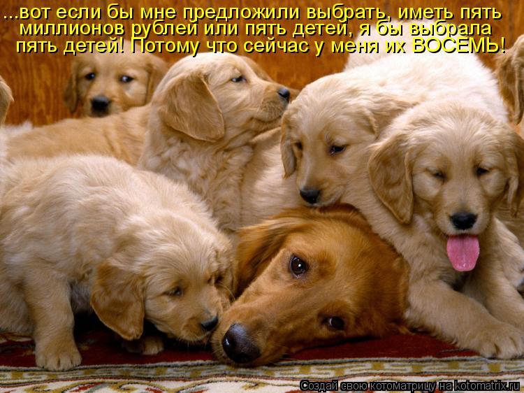 Котоматрица: ...вот если бы мне предложили выбрать, иметь пять миллионов рублей или пять детей, я бы выбрала пять детей! Потому что сейчас у меня их ВОСЕМЬ!