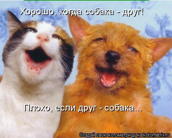 Котоматрица: Хорошо, когда собака - друг! Плохо, если друг - собака...