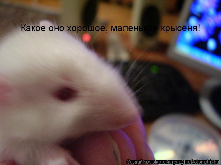 Котоматрица: Какое оно хорошое, маленькое крысеня!