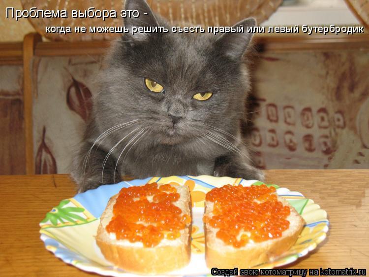 Котоматрица: Проблема выбора это - когда не можешь решить съесть правый или левый бутербродик