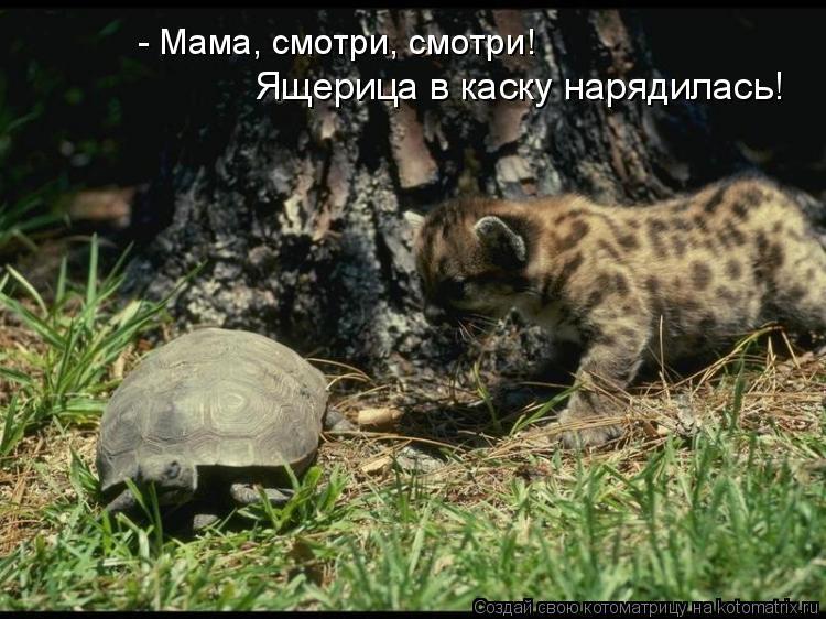 Котоматрица: - Мама, смотри, смотри! Ящерица в каску нарядилась!