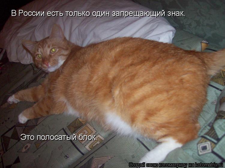 Котоматрица: В России есть только один запрещающий знак.  Это полосатый блок.