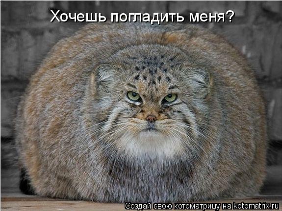 Котоматрица: Хочешь погладить меня?