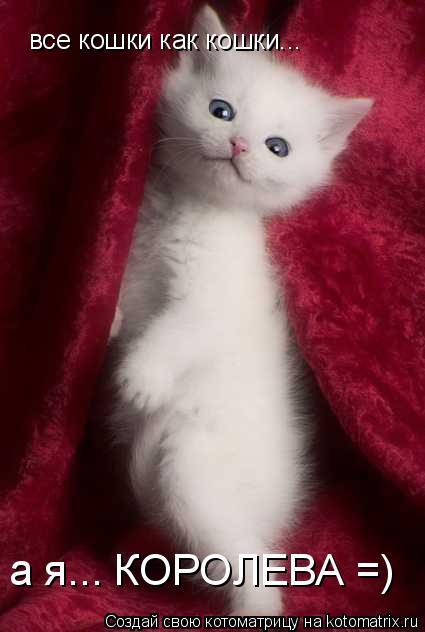 Котоматрица: все кошки как кошки... а я... КОРОЛЕВА =)