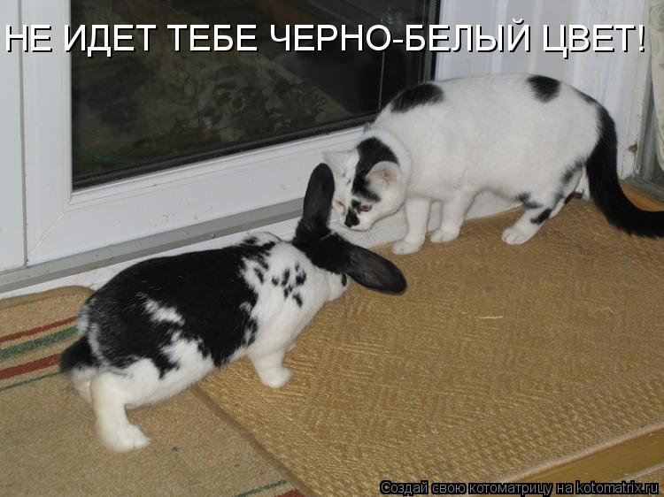 Котоматрица: HЕ ИДЕТ ТЕБЕ ЧЕРНО-БЕЛЫЙ ЦВЕТ!