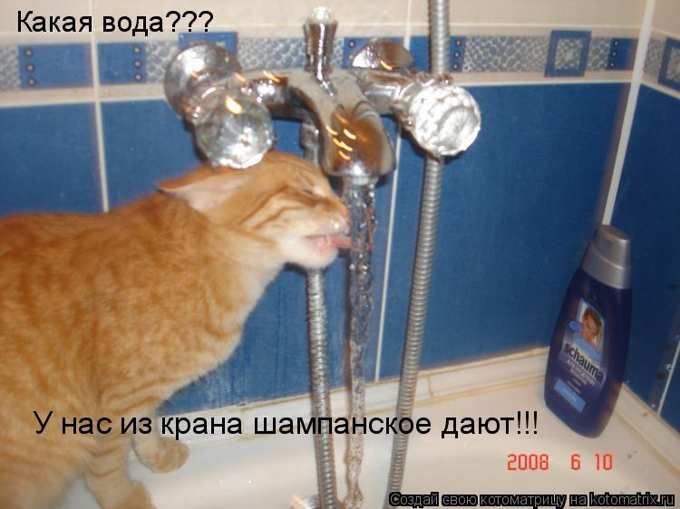 Котоматрица: Какая вода??? У нас из крана шампанское дают!!!