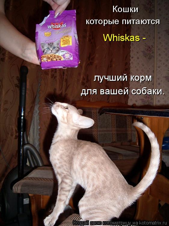 Котоматрица: Кошки которые питаются Whiskas - лучший корм для вашей собаки.