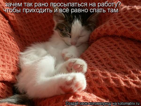 Котоматрица: зачем так рано просыпаться на работу? чтобы приходить и всё равно спать там