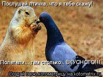 Котоматрица: Послушай птичка, что я тебе скажу! Полетели... там столько.. ВКУСНОГО!!!