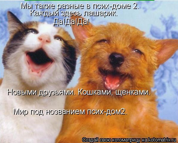 Котоматрица: Мы такие разные в псих-доме 2. Каждый здесь лашарик. Да!Да!Да! Новыми друзьями. Кошками, щенками. Мир под нозванием псих-дом2.